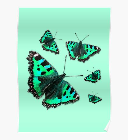 Admiral Butterfly #1 GREEN Poster