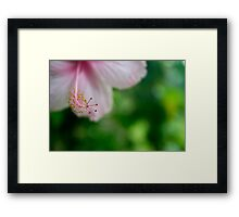 Pink Tropical Hibiscus Flower Framed Print