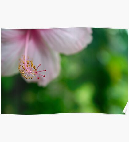 Pink Tropical Hibiscus Flower Poster
