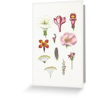 Flower Collage I Greeting Card