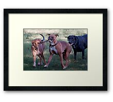 Dogs with game face on .39 Framed Print