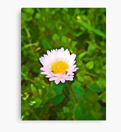 Little Daisy in a Green Field Canvas Print