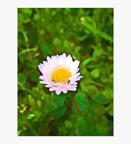 Little Daisy in a Green Field Photographic Print