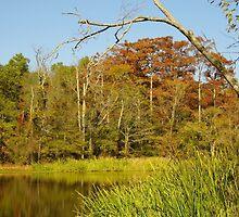 Bayou Autumn  by WildestArt