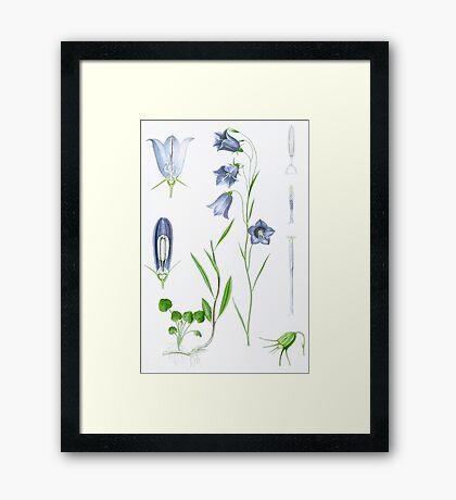 Liden Klokke Framed Print