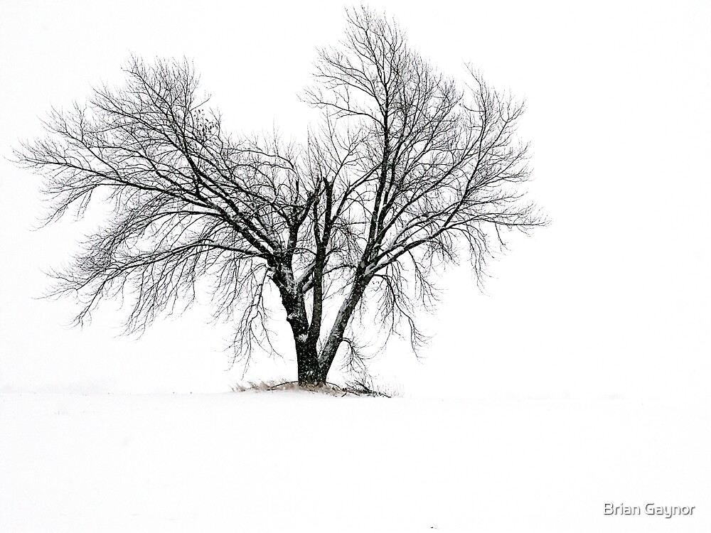 Break in the Landscape by Brian Gaynor