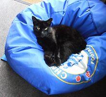 Mr. Mystery - Feline Visitor by kathrynsgallery