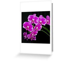 Beautiful spray of orchid flowers Greeting Card