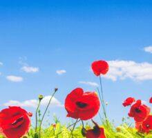 Red Poppies Field Sticker