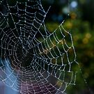 Spiderweb by Real-Illusions