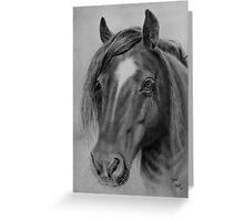 """Sam"" - Horse Portrait Greeting Card"