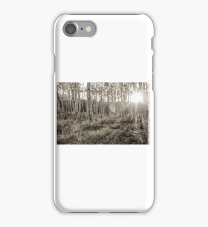 Sunset Through the Forest iPhone Case/Skin