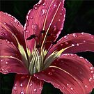 After The Rain - raindrops on Lily painting by LindaAppleArt