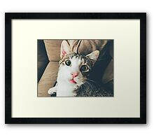 Funny Cute Cat Portrait Closeup Framed Print