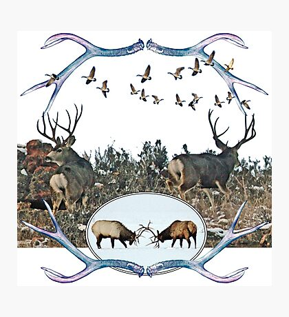 Deer elk and geese  Photographic Print