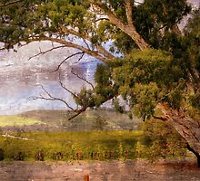 Jacobs Winery in Barossa Valley by aussiedi