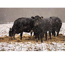 Hay it's snowing ! Photographic Print