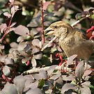 Cute sparrow by ulryka