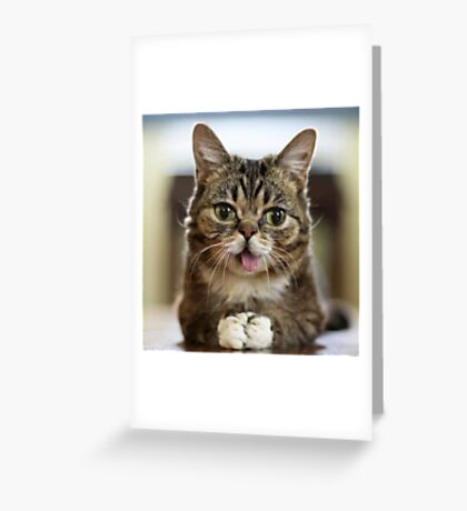 FunnyCat#1 Greeting Card