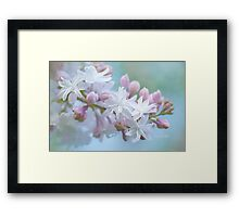 Soft and Lovely Lilac Blossoms Framed Print