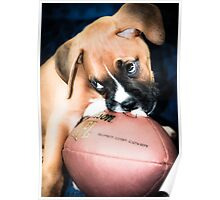 Boxer Breed  Baby  Poster