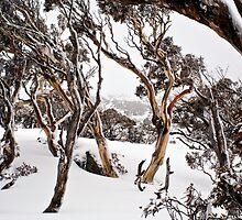 Snow Gums by Trudi Skinn