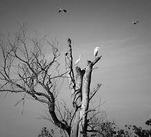 Birdland by Lynn Starner