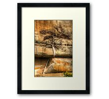 Ficus Espaleatus .. Survival on the rocks Framed Print