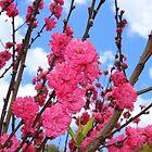 spring has come by Jeannine de Wet