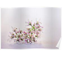 Cilantro flower Poster