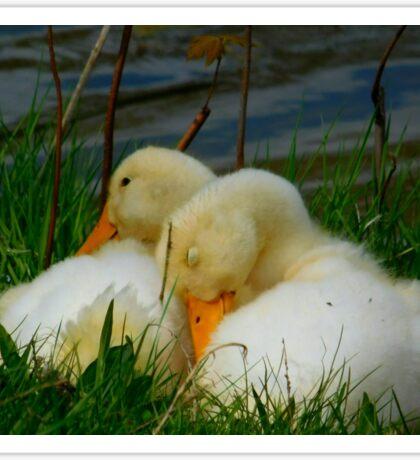 Sleeping Ducks Sticker