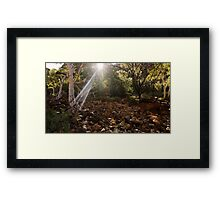 Ghostly Rays Framed Print