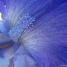 Iris Tongue by MarianBendeth