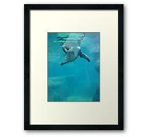 Penguin Underwater Framed Print