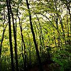Green Lights in the Woods by Norbert Karpen