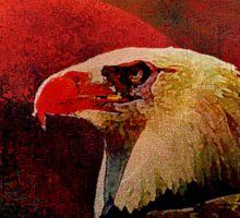 Eagle at night Sticker