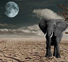 Black Elephant (Desert) by pttg