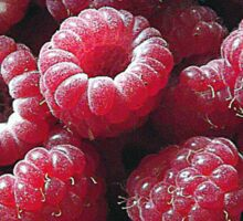 Raspberries close up Sticker