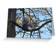 I'm up here! Greeting Card
