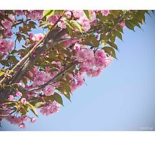 Lovely pink Photographic Print