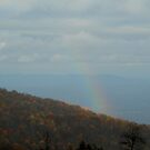 In the Midst of the Fog - Blue Ridge Mtns - VA by ctheworld