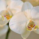 Beautiful Orchids by TheaShutterbug
