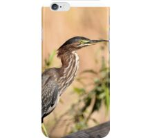 Green Heron ( Butorides virescens ) iPhone Case/Skin