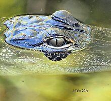 Gator Eye (Alligator mississippiensis) by Jeff Ore