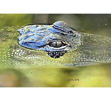 Gator Eye (Alligator mississippiensis) Photographic Print
