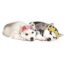 Husky Puppies Flower Crown Sleeping Photographic Print