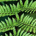 Tree fern by AnnaKT