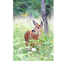 Once upon a Fawn - White Tailed Deer Fawn Photographic Print