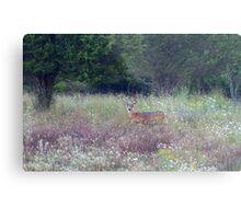 Buck in the Meadow - White tailed deer buck Metal Print