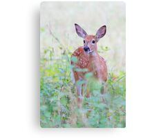 White Tailed Deer Fawn Canvas Print